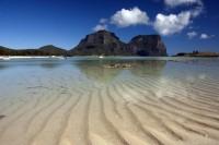 Bush Regeneration, Lord Howe Island