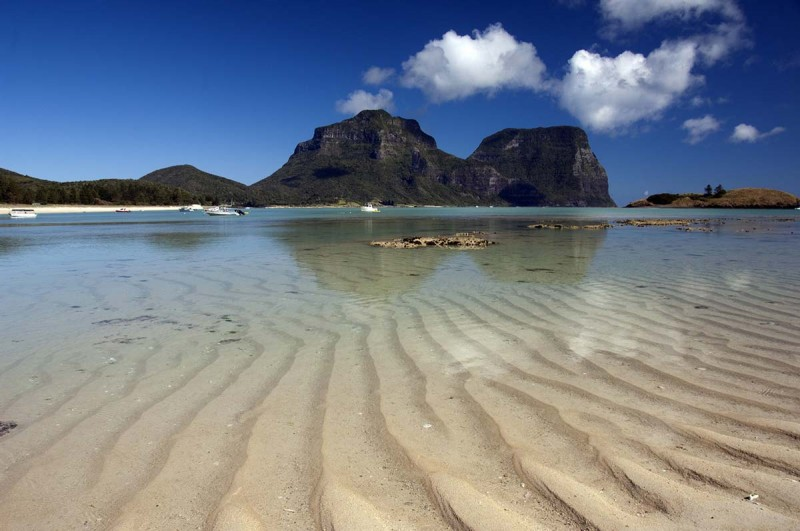 Bush Regeneration, Lord Howe Island
